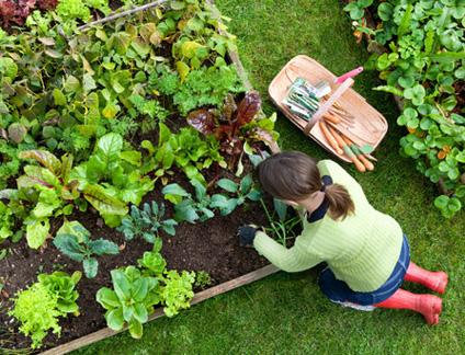 Ook tuinieren bij Eigen Tuin Haarlem?